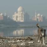 Серия 16 Индия — Обратная сторона Тадж-Махала