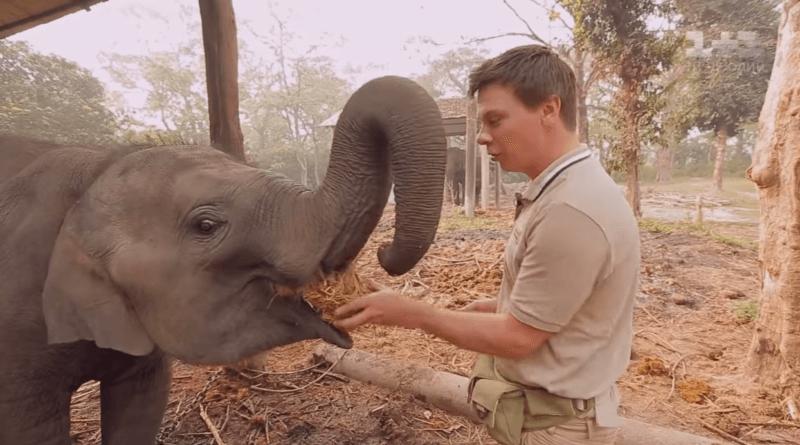 Приключения в диких джунглях