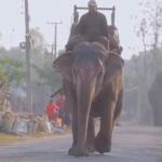 Серия 11 Непал — Праздник в Катманду и дикие джунгли на границе с Индией