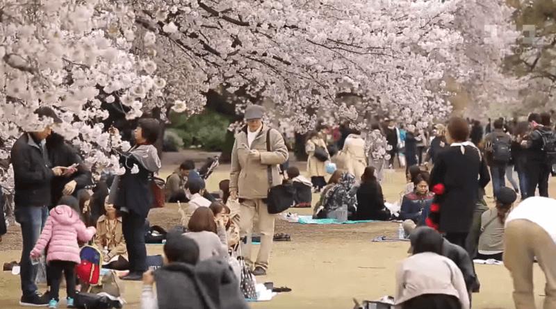Страна сакуры и трудоголиков