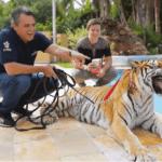 Серия 14 Бразилия — Особняк для тигров и опасные исследования кайманов