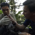 Серия 24 Китай — Охота на ядовитую змею и какой по вкусу змеиный суп